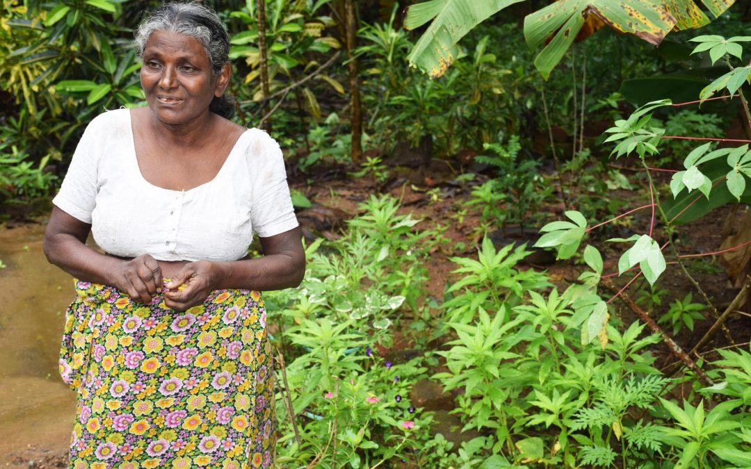 I Wamier sbarcano in Sri Lanka